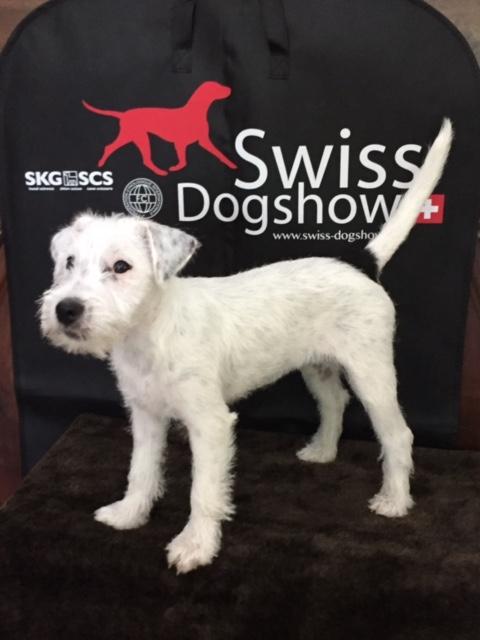 06.08.2017 - SKG Swiss Dog Show - Kreuzlingen